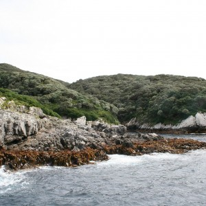 Vegetation surrounding boat harbour. Snares Islands, North-East Island. Image: Antony Kusabs, Te Papa.