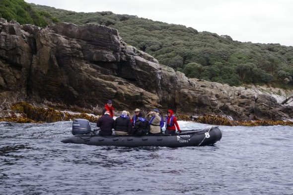 Tourists on a zodiac cruise along the eastern shoreline of the Snares Islands. Image: Colin Miskelly