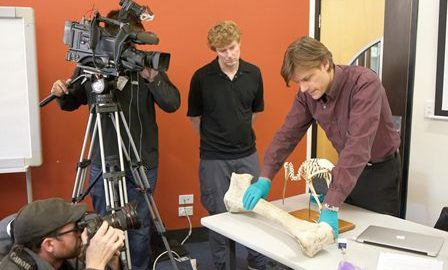 Alan Cooper holds a giant elephant bird leg bone in front of a kiwi skeleton for media as Alan Tennyson looks on. Photo: Jean-Claude Stahl © Te Papa