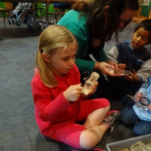 Examining the spiders in the resin blocks, Photographer: Newtown Kindy, © Newtown Kindy