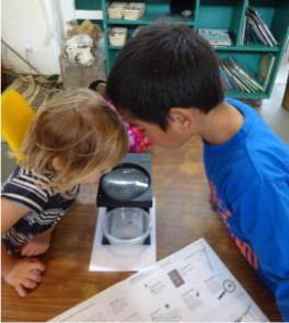 Identifying our spider, Photographer: Newtown Kindy, © Newtown Kindy