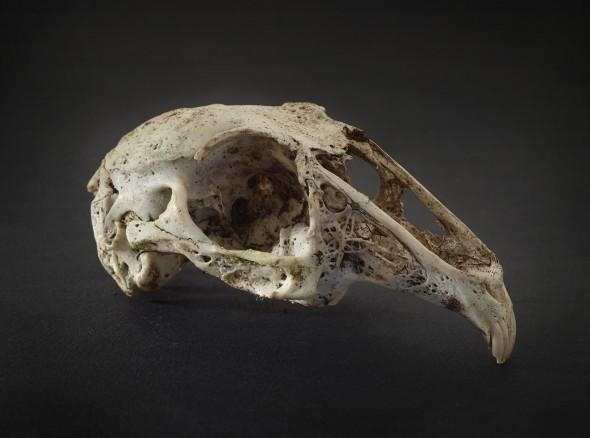 rabbit rather dead
