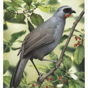 South Island kokako. From 'Extinct birds of New Zealand'. Painting by Paul Martinson (original held by Te Papa)