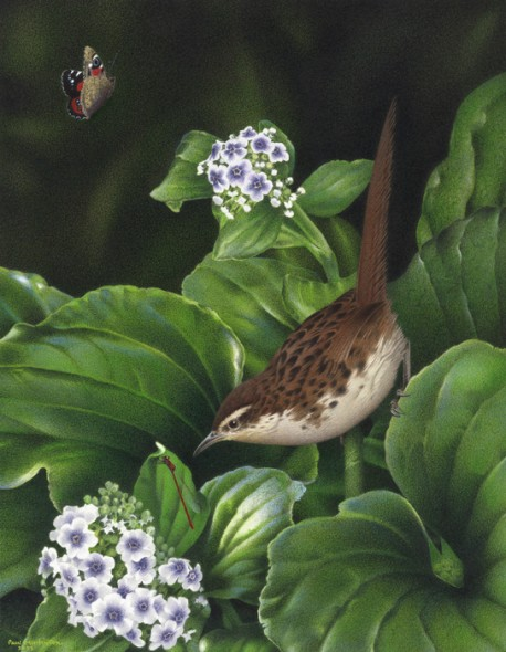 A Paul Martinson painting of the extinct Chatham Island fernbird, as reproduced on New Zealand Birds Online. Image: (c) Te Papa