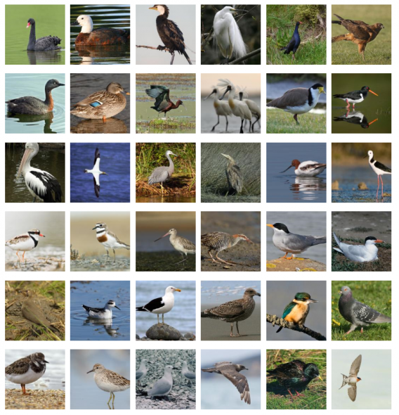 A screenshot from 'Identify that bird' on New Zealand Birds Online, showing master images that work as thumbnails (and a few that don't!). Image: New Zealand Birds Online