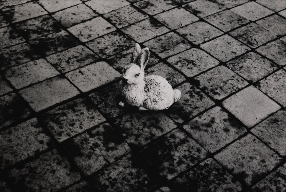 Peter Peryer. 'The concrete rabbit', 1982. Gelatin silver print. Purchased 1982 with New Zealand Lottery Board funds. O.002884. Te Papa.