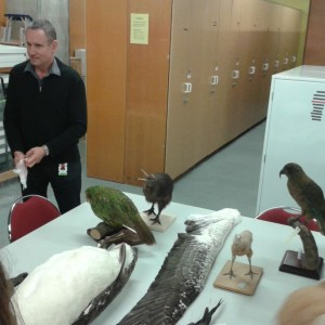 The students are shown a white-bellied sea eagle.