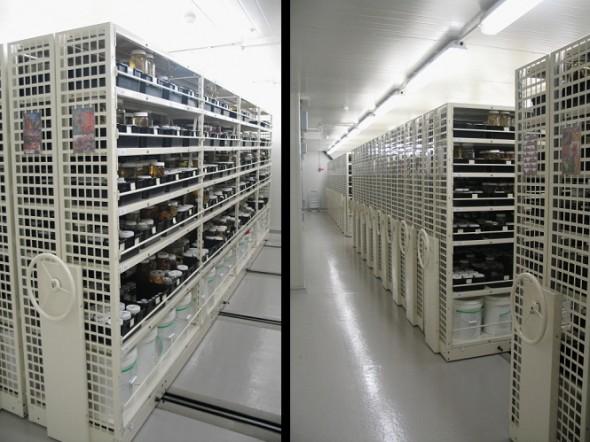 Jar and pail storage at Te Papa's collections facility. Photo: Rick Webber, Copyright Te Papa.