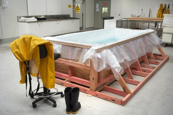 The colossal squid will be defrosted in this tank. Photographer: Jean-Claude Stahl © Te Papa