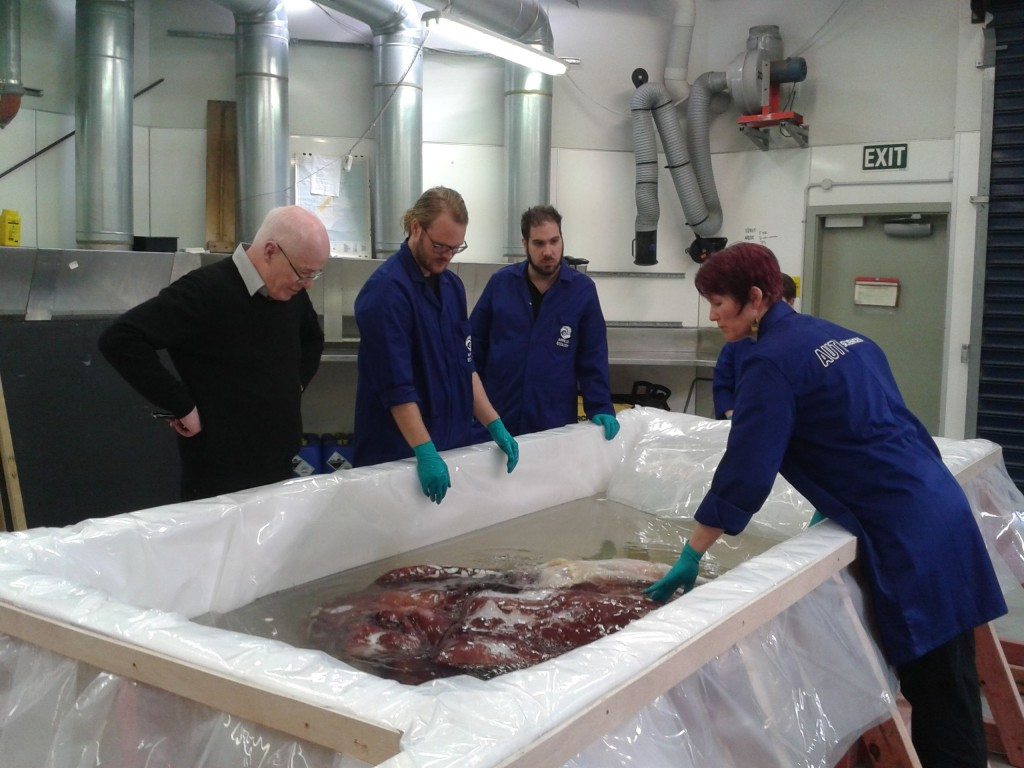 Scientists examine the colossal squid. Photographer: Ruth Hendry © Te Papa