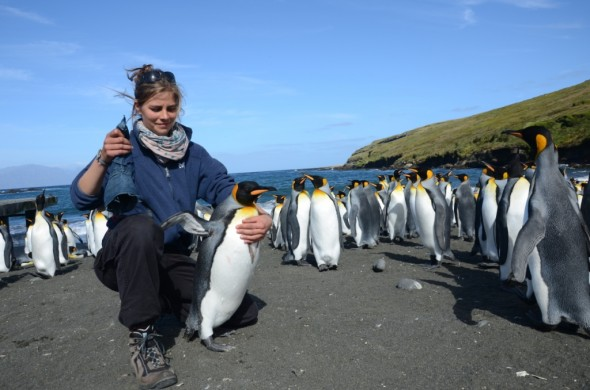 Caroline Bost, King penguin colony at Baie du Marin, Crozet Island. photo: Robin Cristofari, copyright: Caroline Bost