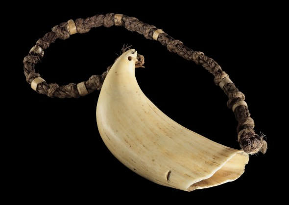 Whale's tooth on a braided necklace