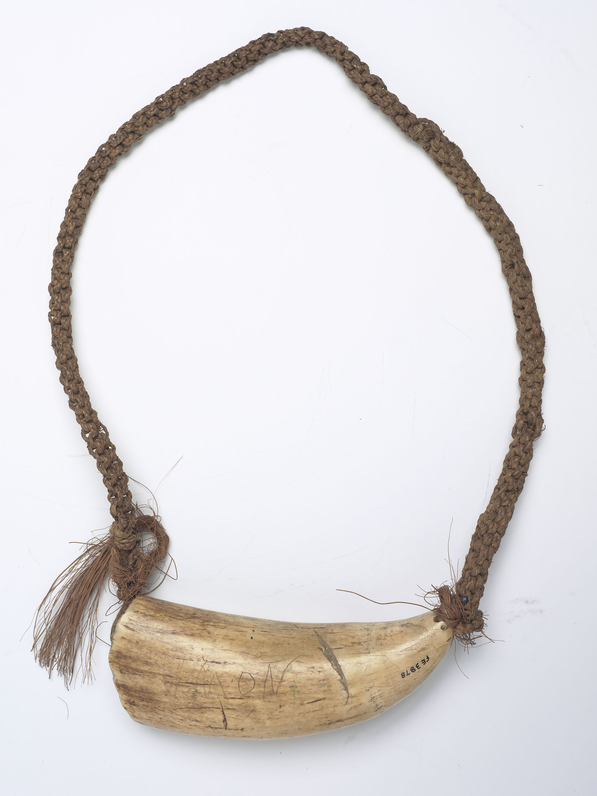 "Whale's tooth attached to a braided necklace. On the tooth is scratched ""NOWA"""