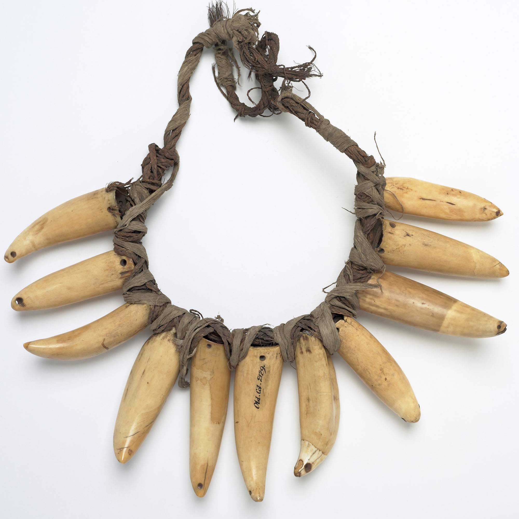 Necklace made of multiple whale's teeth