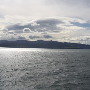 Palliser Bay and the waters outside of Wellington Harbour heads, and area used by many seabirds in New Zealand, and commonly by little penguins from Wellington harbour breeding sites. Image Susan Waugh, Copyright Te Papa.