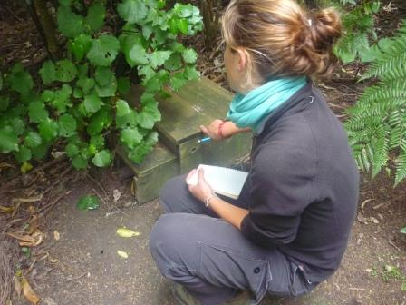 Monitoring nest boxes for the return of little penguin adults which have been foraging at sea. Photo Caroline Bost, Copyright Caroline Bost