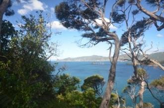 View from the top of Motuara Island. Image Caroline Bost, Copyright Caroline Bost.