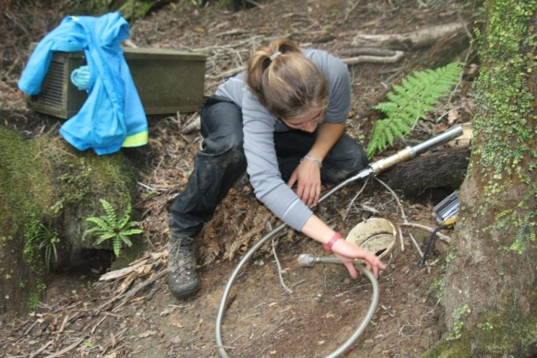 Caroline Bost, Te Papa intern inspects a petrel nests with a burrow scope to assess the breeding success. Image: Susan Waugh, Copyright Te Papa.