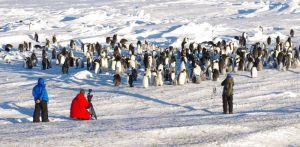 Tourists visiting the southernmost penguin colony on the planet - the emperor penguin colony at Gould Bay. Image: Colin Miskelly