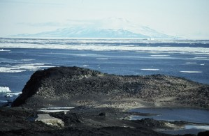 Adelie penguins nesting at Cape Royds, with Shackleton's hut at the lower left. Image courtesy of Peter Carey