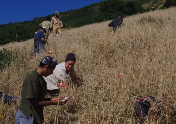The team searching for prion chicks, with Hauora Paul and Lonae Paul (Ngāti Koata) in the foreground. Image: Colin Miskelly, Te Papa