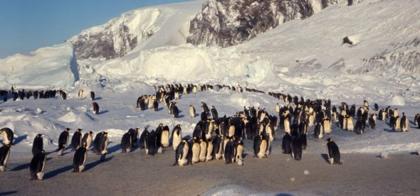 Cape Crozier emperor penguin colony. Image courtesy of Gerald Kooyman