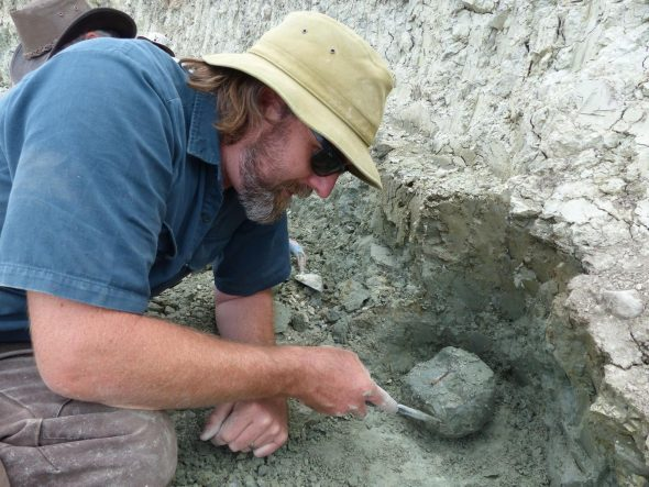 Steve Salisbury (University of Queensland) carefully excavates a bone, January 2014. Photographer: Alan Tennyson © Te Papa