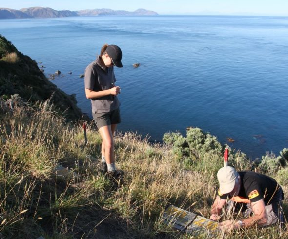 A work site with a view. Fenella Fenton (left) and Luke Rawnsley checking artificial burrows to see which of the fairy prion chicks had departed overnight. Image courtesy of David Cornick
