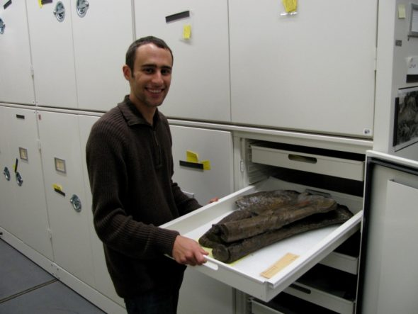 Steve examining collections in the American Museum of Natural History, New York.
