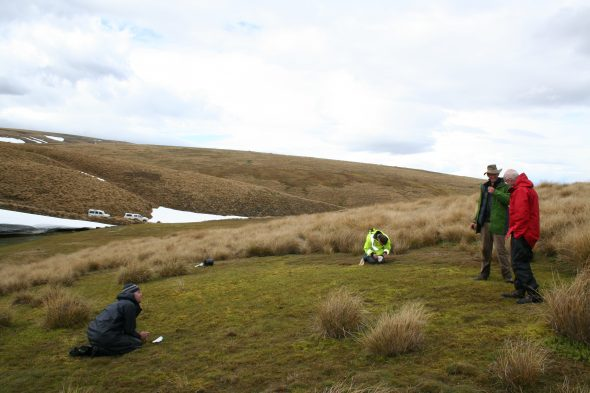 Finally in the field: Ant Kusabs, Kerry Jones, Mike Thorsen and Phil Garnock-Jones searching for forget-me-nots in the Old Man Range. Photo by Heidi Meudt © Te Papa.