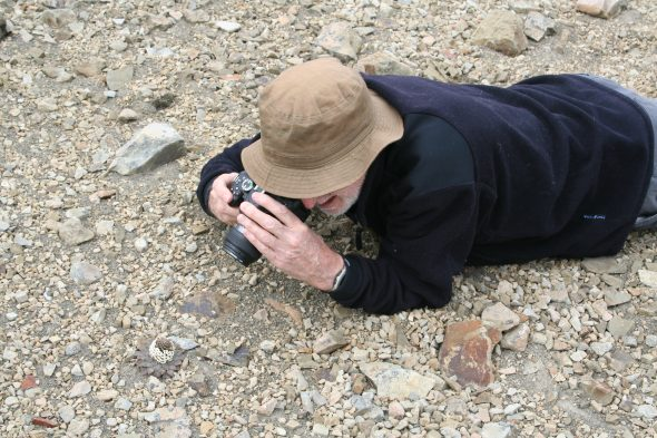 Phil and the penwiper plant: There are so many of these Notothlaspi rosulatum (yes, I spelled that correctly!) plants at Mt St Patrick that we have to be careful not to step on them! Here is Phil photographing one of them. Photo by Ant Kusabs © Te Papa.