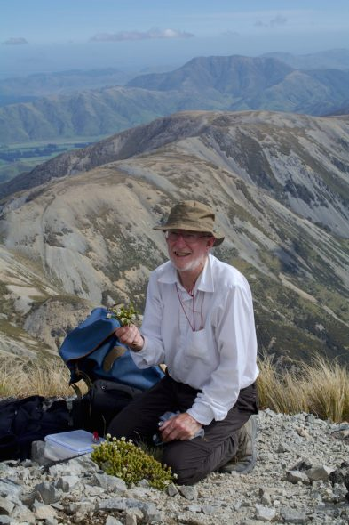 Happy botanist: Phil Garnock-Jones collecting a specimen of Veronica epacridea on Mt Torlesse. Photo by Heidi Meudt @ Te Papa.