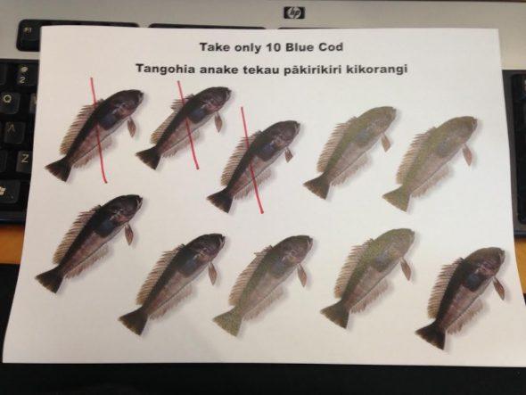 Setting fish quotas, Photographer: Te Papa, © Te Papa