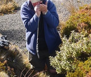 Peter Beveridge using a hand lens to examine a bryophyte specimen, amongst subalpine vegetation.