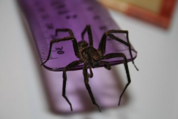 Spider specimen, Photographer: Imagine Childcare, © Te Papa