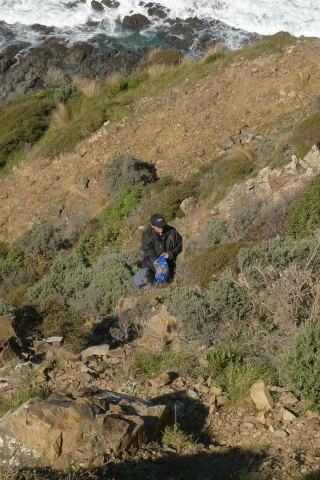 WCC's Anita Benbrook in action. The steepness of the sites many have afforded some protection to these plant populations. Photo Leon Perrie. © Te Papa.