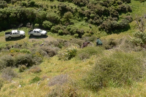 Staff from WCC's Otari-Wilton's Bush search a hillside for suitable source material. Photo Leon Perrie. © Te Papa.