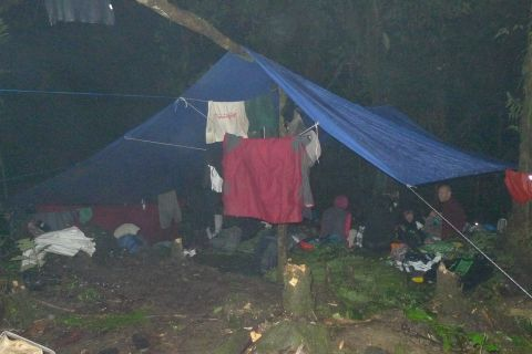 Sleeping quarters at the Haviha River satellite camp. We spent two nights here, accessing higher elevations than available immediately around Valevahalo. A ground matting of tree fern fronds kept us separated from the mud. Photo Leon Perrie. (c) Te Papa.
