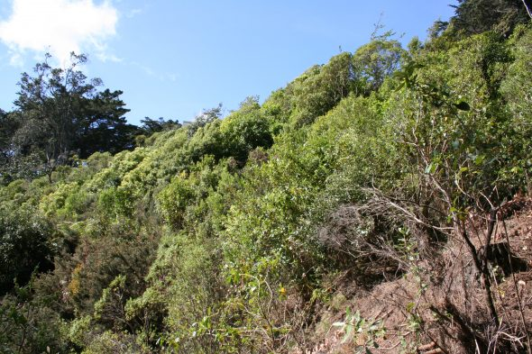 A WCC planting site established in 2001 with a north-east aspect. Image: Antony Kusabs, Te Papa, October 2015.