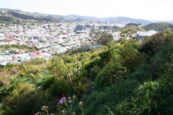 A WCC planting site established in 2010, with a north-west-west aspect. Image: Antony Kusabs, Te Papa, October 2015.
