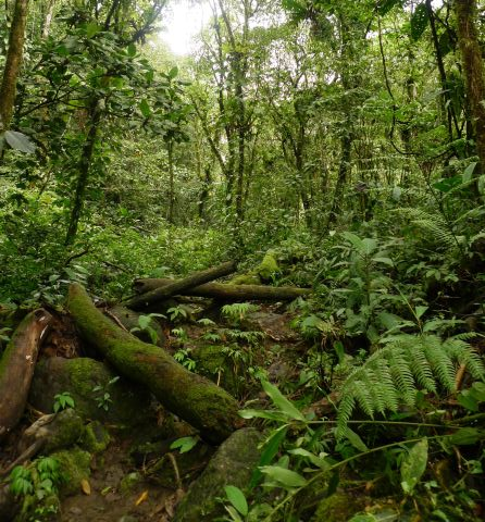 Jungle at one of our collecting sites near the main field camp. Photo Leon Perrie. © Te Papa.