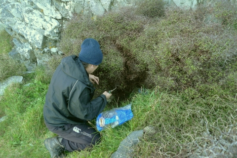 WCC's Anita Benbrook taking cuttings from a plant of Muehlenbeckia astonii that is tucked under a rocky outcrop. Photo Leon Perrie. © Te Papa.