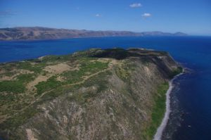 Aerial view of the west coast of Mana Island, January 2015. Speargrass weevils were released at the left-centre of the image, between the track and the cliff-top. Image: Colin Miskelly, Te Papa