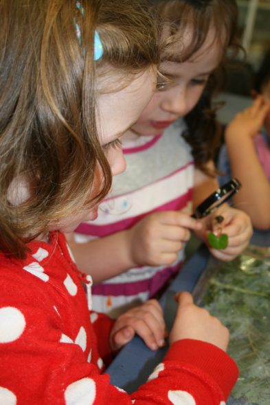 Looking closely at a spider orchid, Photographer: Imagine Childcare, © Te Papa