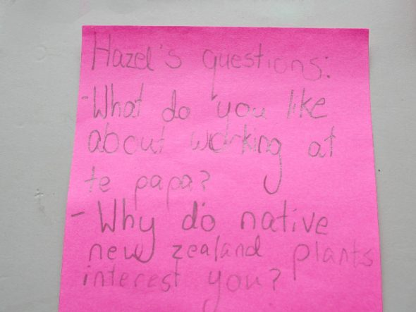 """""""What do you like about working at Te Papa? Why do native New Zealand plants interest you?"""" --Hazel. Photo by Heidi Meudt © Te Papa."""