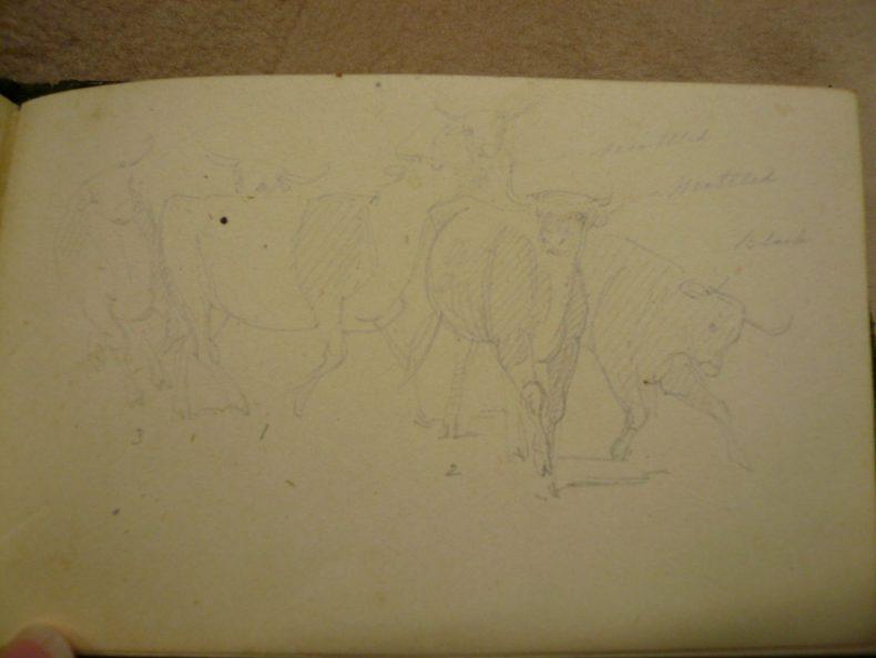 Cow studies