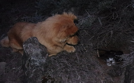 Life + Petrel. Life the petrel dog with a Barau's petrel burrow he discovered. Image: Colin Miskelly, Te Papa