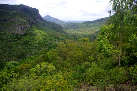 Black River Gorges National Park. Image: Colin Miskelly