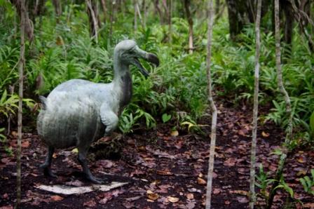 Dodo statue, Ile aux Aigrettes. Image: Colin Miskelly, Te Papa