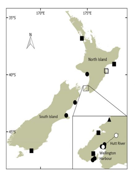 Verified records of three species of vagrant Antarctic seal from New Zealand. Circles = crabeater seals, with open circles showing second locations for two animals, squares = Weddell seals, with open squares showing second locations for two animals, triangle = Ross seal. A version of this map was published in NZ J Marine & Freshwater Research Vol 49, part 4 (reference given below).